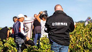 France : un réseau qui exploitait une centaine de vendangeurs bulgares démantelé