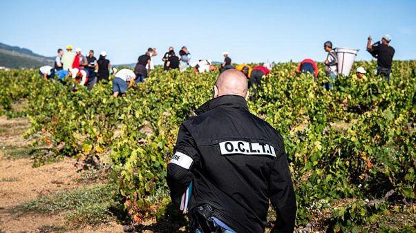 Francia, smantellata rete di trafficanti di esseri umani tra le vigne del Beaujolais