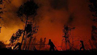 UNICEF: Endonezya'da orman yangınları nedeniyle 10 milyon çocuk tehdit altında