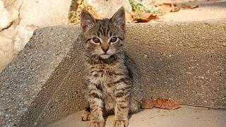 A macskák is kialakítanak kötődést az emberrel