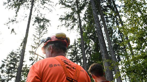 800 Millionen Euro für die Rettung deutscher Wälder