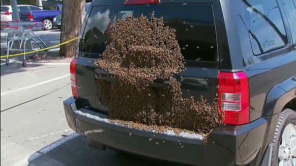 شاهد: تصرف غريب لسرب من النحل في مدينة أسترالية