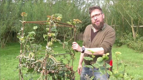Watch: Meet the British furniture farmers fighting deforestation