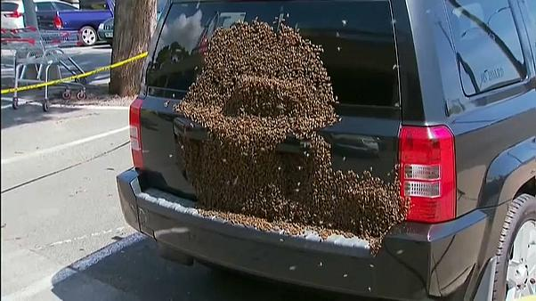 Swarm of bees creates a buzz in an Adelaide car park