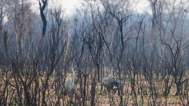 La forêt de Bolivie vidée de sa faune : 2,3 millions d'animaux calcinés