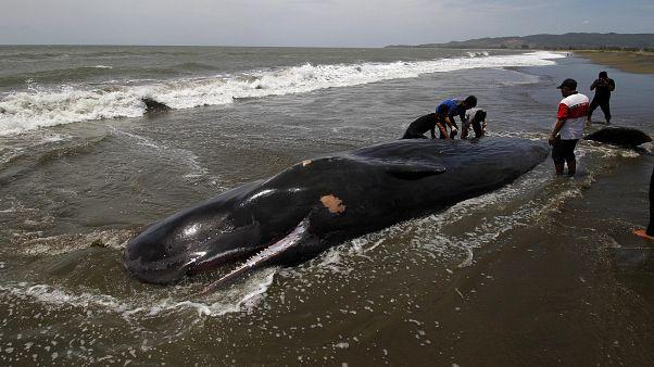 Karaya vuran balina