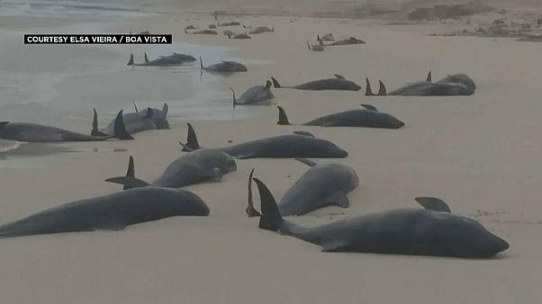 مجموعة من الحيتان النافقة على شاطئ البحر
