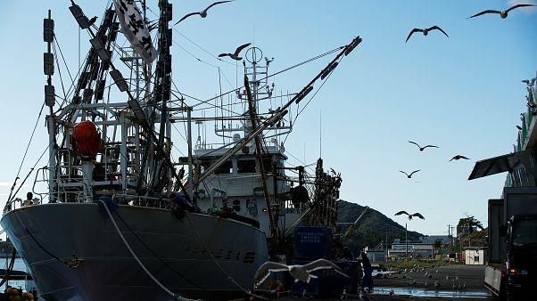 Rusya, Kuzey Koreli üç balıkçı teknesine el koydu, 262 denizciyi gözaltını aldı