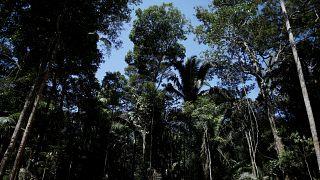 Avrupa'da ağaç türlerinin yarısıdan fazlası yok olma tehlikesiyle karşı karşıya