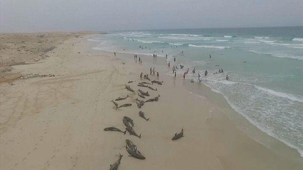 Hecatombe de delfines en la playa del Altar, en Cabo Verde