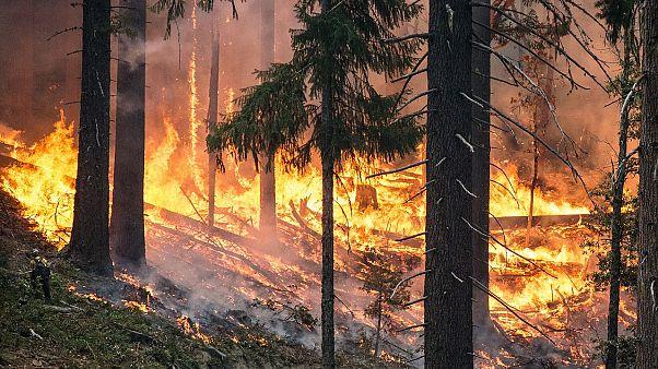 Türkiye'de bu yıl 5 bin 465 hektar ormanlık alan yok oldu
