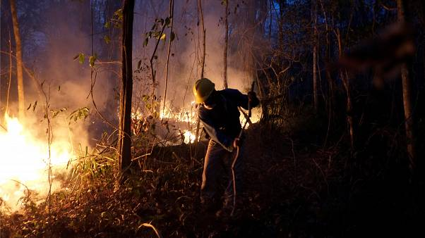 In Bolivia dove l'alta frequenza di incendi ha mandato in fumo milioni di ettari di foresta