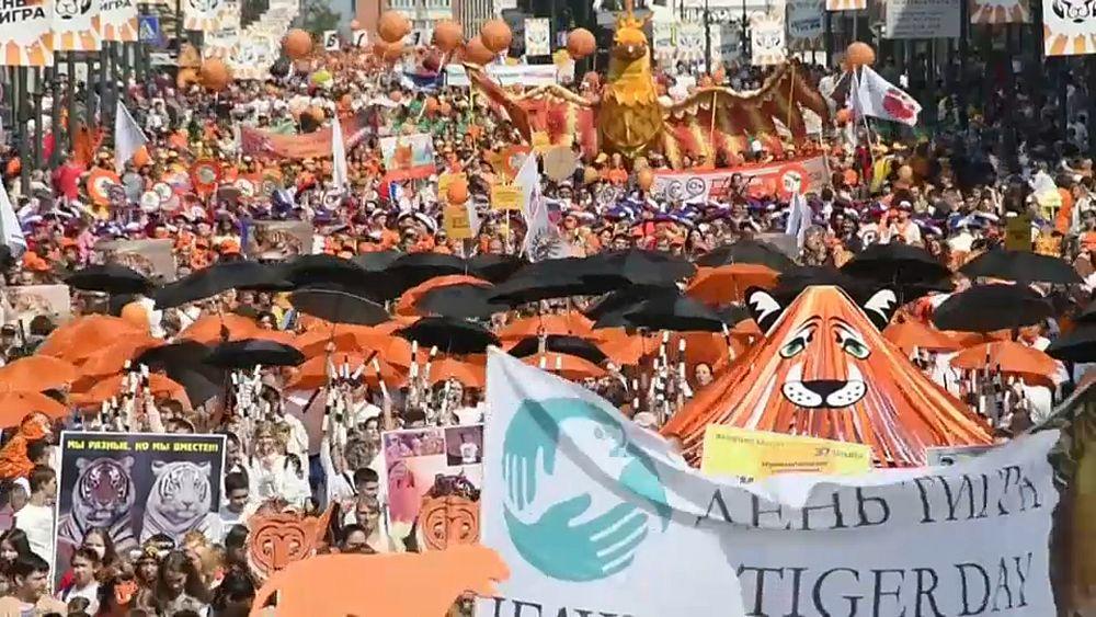 Watch: Vladivostok turns orange for Tiger Day - Euronews