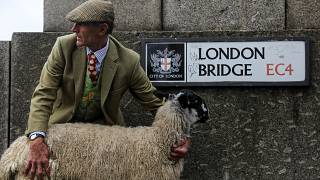 Овцы прогулялись по Лондонскому мосту