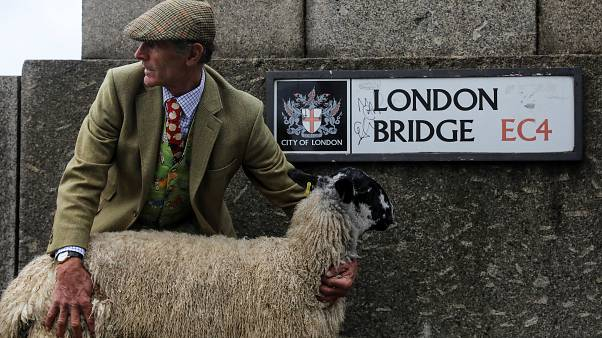 Flock of sheep cross London Bridge in centuries-old tradition