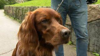 Hundedurchfall in Norwegen: Entwarnung, aber keine Erklärung