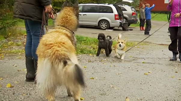 Собакам разрешили общаться