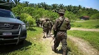 Guatemala destruye más de 1,5 millones de plantas de coca