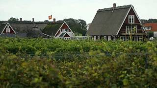 There are now around 40 vineyards in Sweden