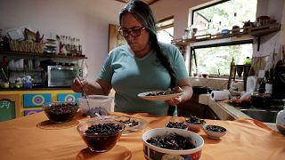 Κόστα Ρίκα: Ένα θρεπτικό γεύμα από έντομα!