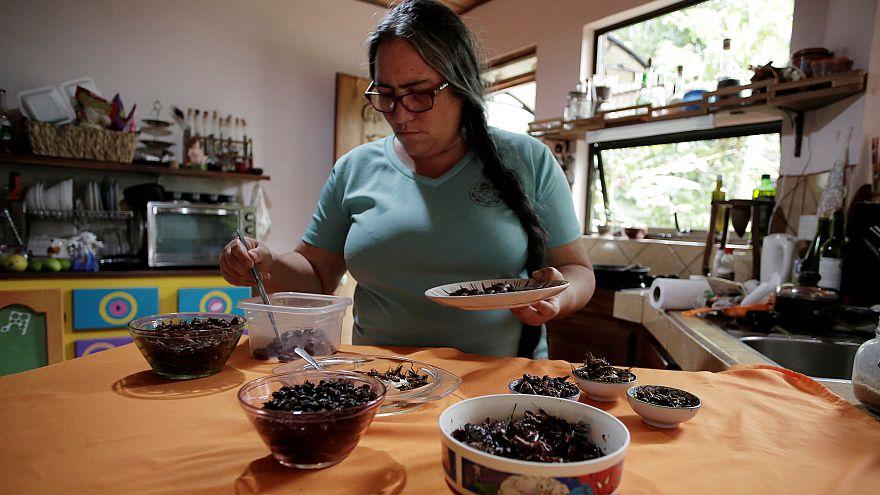 زیست شناس اهل کاستاریکا تغذیه با حشرات را جانشین مصرف پروتئین حیوانی کرد