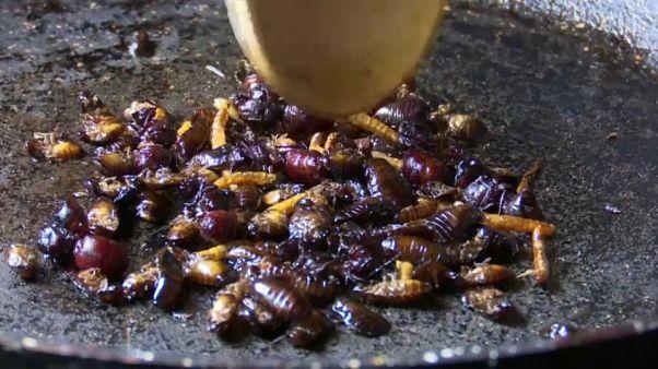 """""""Wie Kartoffelchips"""": Familie in Costa Rica schwört auf knackige Käfer"""