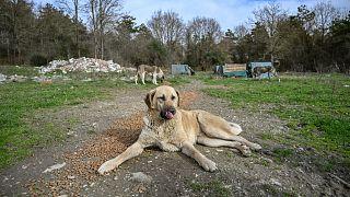 Hayvanları Koruma Günü: Onların çıkaramadığı ses oluyor muyuz?