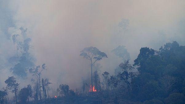 Amazonlardaki orman yangını