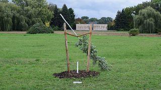 Almanya'da ırkçı NSU örgütünün ilk kurbanı Enver Şimşek anısına dikilen ağaca saldırı
