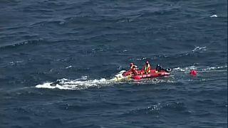 شاهد: تحرير حوت علق في شباك صيد القروش في أستراليا