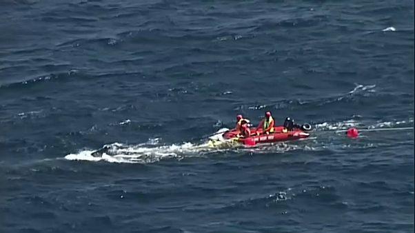 Australien: Wal aus Hainetz befreit
