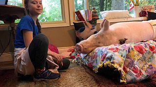 Greta trifft ein Schwein, antwortet Putin und mobilisiert für 29.11.