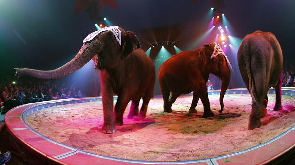 FILE PHOTO: Elephants perform during a rehearsal for new show of Swiss National-Circus Knie in Rapperswil