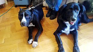 Σκύλοι - θεραπευτές για ηλικιωμένους
