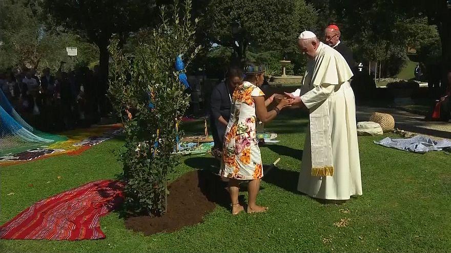 درختکاری پاپ به مناسبت آغاز «هفتههای آمازون»