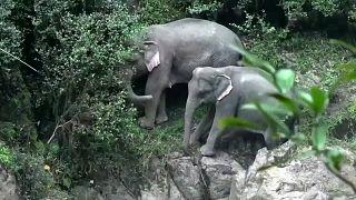 Tragischer Tod am Wasserfall: 6 Elefanten sterben