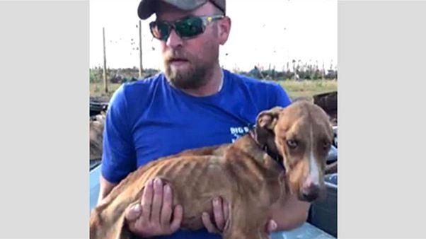 'Mucize' adlı köpek 4 hafta sonra enkaz altından kurtarıldı