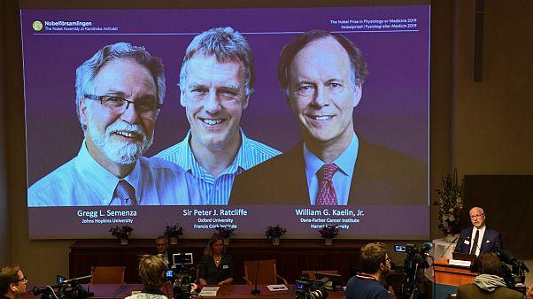 جایزه نوبل پزشکی بطور مشترک به سه پژوهشگر آمریکایی و بریتانیایی اعطا شد
