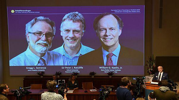 تتويج كيلين راتكليف وسيمنزا بجائزة نوبل للطب لعام 2019