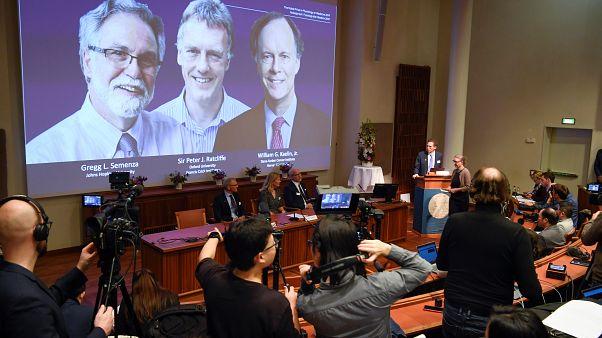 Nobel Tıp Ödülü bu yıl William Kaelin, Peter Ratcliffe ve Gregg Semenza'ya verildi