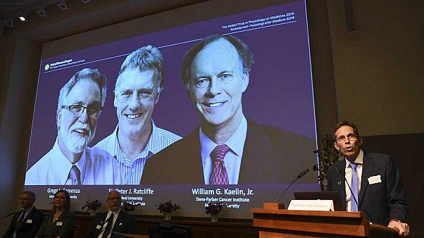 Le Nobel de médecine 2019 attribué à W. Kaelin, G. Semenza et P. Ratcliffe