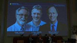 Нобелевская премия по медицине-2019:  Келин,  Рэтклиф и Семенза