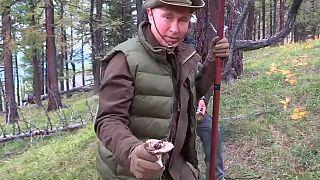 Outdoor-Geburtstag: Kremlchef Putin sammelt Pilze und besteigt 2000er