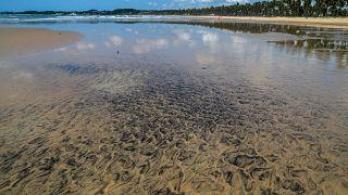 Les mystérieuses marées noires brésiliennes seraient criminelles