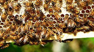 خطر انقراض گسترده حشرات با ۵۰ برابر شدن سموم در زمینهای کشاورزی
