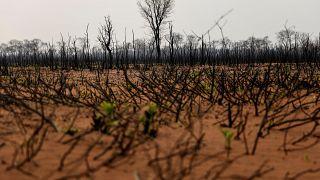 Esők oltották el a két hónapja pusztító erdőtüzeket Bolíviában