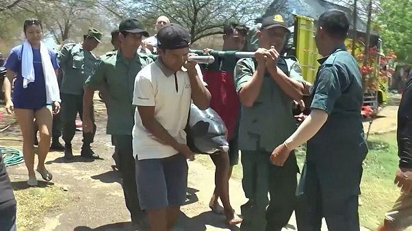 Ινδονησία: Απομακρύνθηκαν δελφίνια από νοσοκομείο
