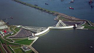 Rotterdam: Mit Dachgärten und Kuhställen auf dem Wasser gegen den Klimawandel