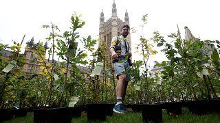 Umweltaktivisten stellen Politikern Hunderte Bäumchen vor die Nase