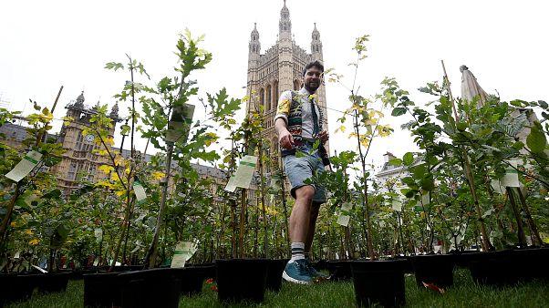 Extinction Rebellion activists plant trees outside UK parliament